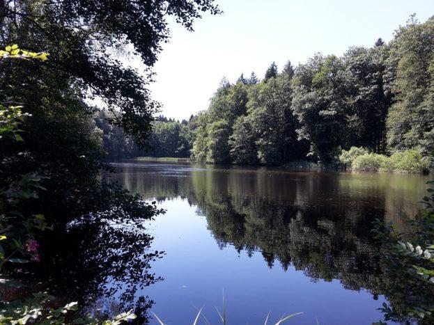 Langmoosweiher Altdorfer Wald
