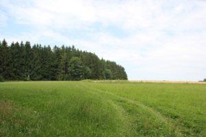 Felder Wanderung Illmensee Wilhelmsdorf