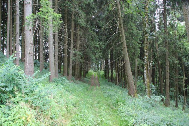 Feldweg Wanderung Illmensee Wilhelmsdorf