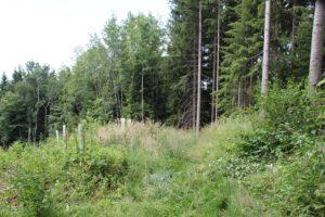 Wald beim Aufstieg Wanderung Illmensee Wilhelmsdorf