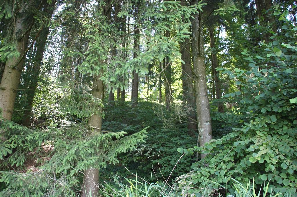 Bewaldeter Berg Burg Arnach
