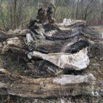 Holzreste zur Bestimmung Schussen