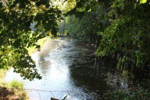 Mahlweiher Ufer Oberschwaben