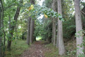 Weg durch Wald Burgruine Hausen im Tal
