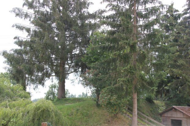 Burgstall Daugendorf