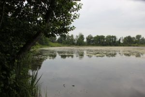 Holzweiher Ufer