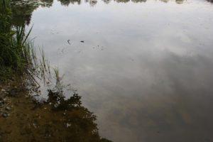 Holzweiher Wasser