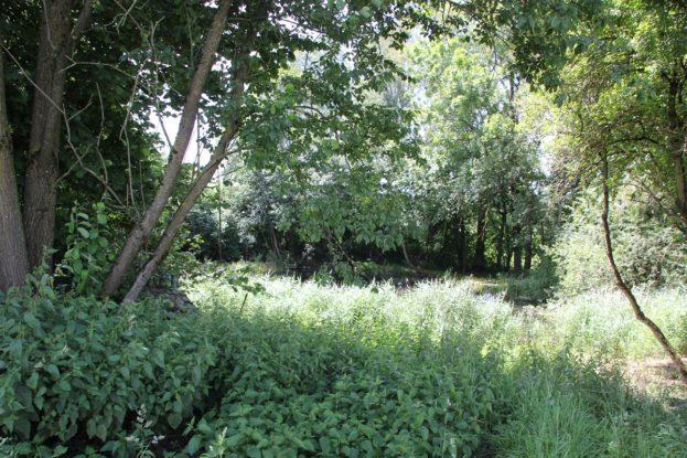 Naturschutzgebiet Mauchenmuehle