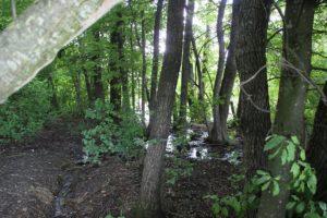 Niedermoor Naturschutzgebiet Mauchenmuehle