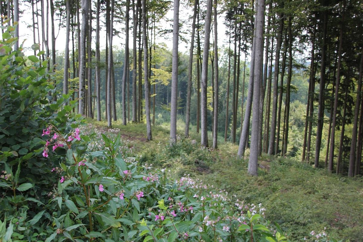 Altdorfer Wald