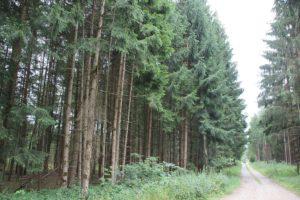 Baeume und Wege im Erolzheimer Wald