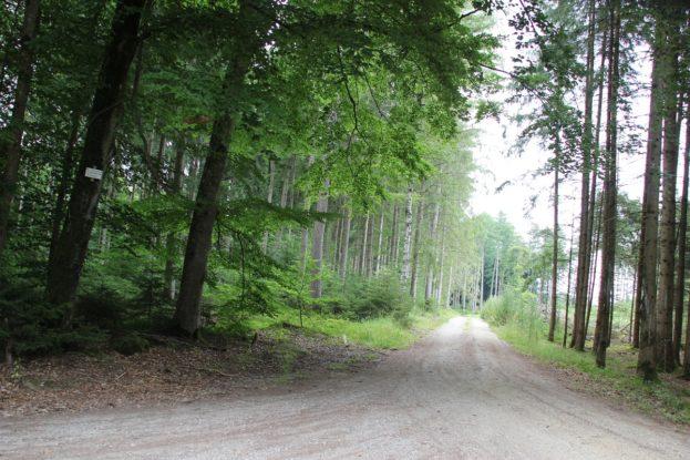 Erolzheimer Wald