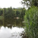 Steg am Ilgenweiher Niedernzell