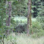 Unzugaenglicher Ilgenweiher