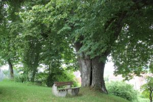 Baum St Jakobus Eggmannsried