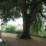 Bank unter Baum Kirche Eggmannsried