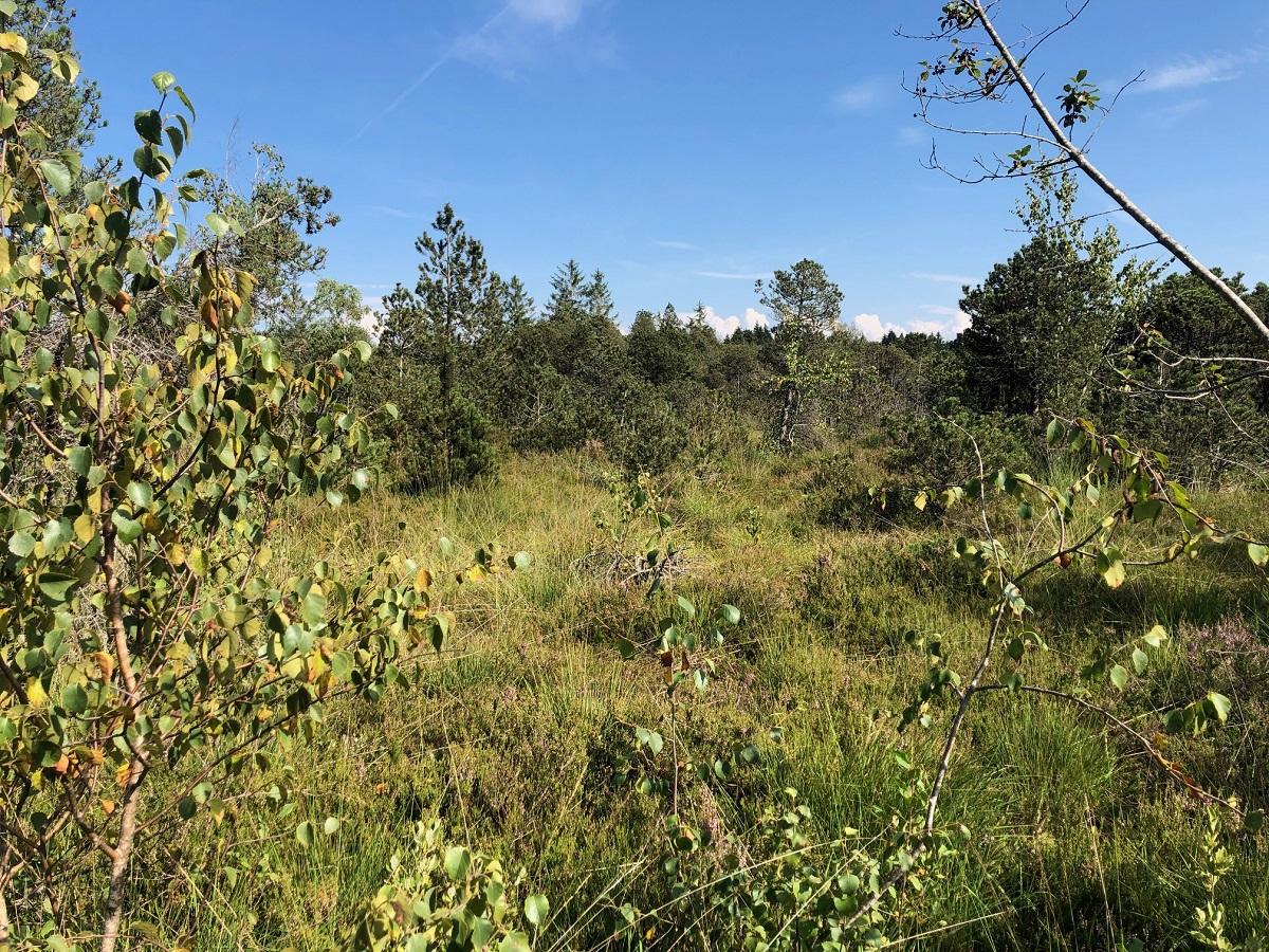 Naturschutzgebiet Bodenmoeser